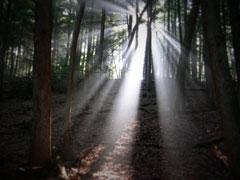 light-through-wildwood
